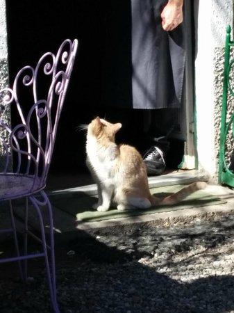 Trattoria del Cacciatore: il gatto Romeo