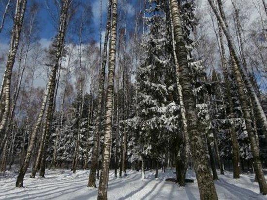 Provincia de Minsk, Bielorrusia: Прилепский заказник