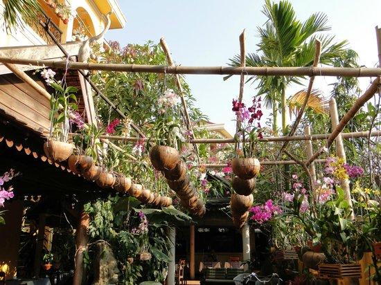 Auberge Mont-Royal d'Angkor: Les orchidées