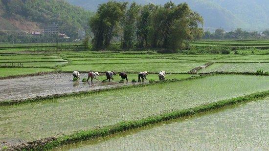 Footprint Vietnam Travel Day Tours: Amazing rice fields of Vietnam!