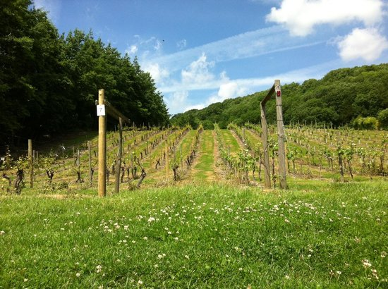 Godstone Vineyards
