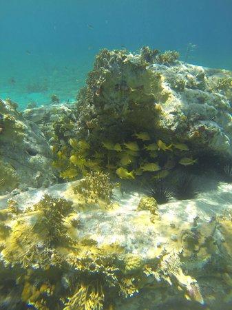 Cooper Island Beach Club: Manchioneel Bay Snorkel - just off Cooper Beach