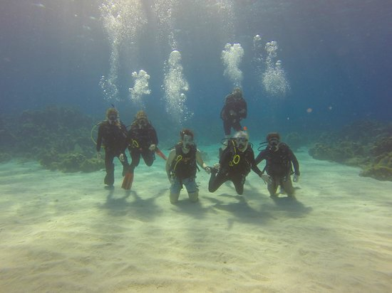 Coconut Tree Divers: The Whole Family
