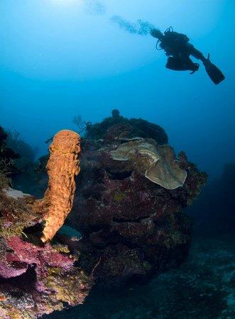 Caribbean Villas Hotel : Underwater Ambergris Caye