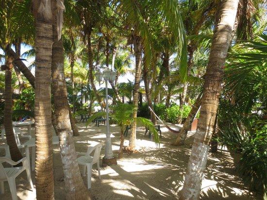Hotel Villa Kiin: Lush hammock garden