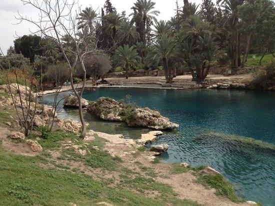 Gan HaShlosha National Park: Hasachne