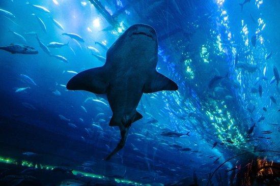 Dubai Aquarium & Underwater Zoo: Внутри трубы