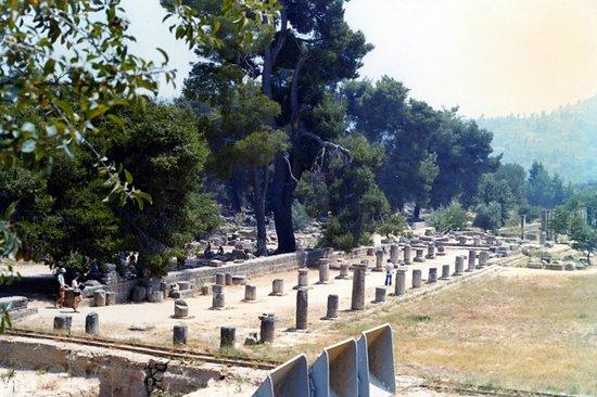 Le site archéologique d'Olympie (Archaia Olympia) : ginnasio