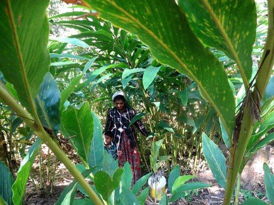 SpiceTree Munnar: rando dans les plantations d' épices