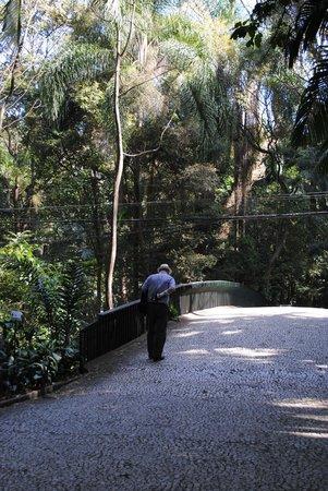 Tenente Siqueira Campos Park (Trianon): The bridge that unites both sides of Trianon Park