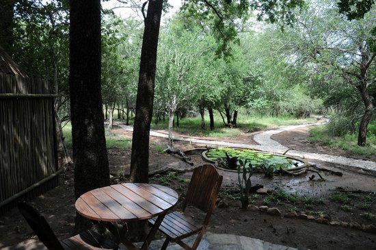 KwaMbili Game Lodge : There is no fence around the camp.