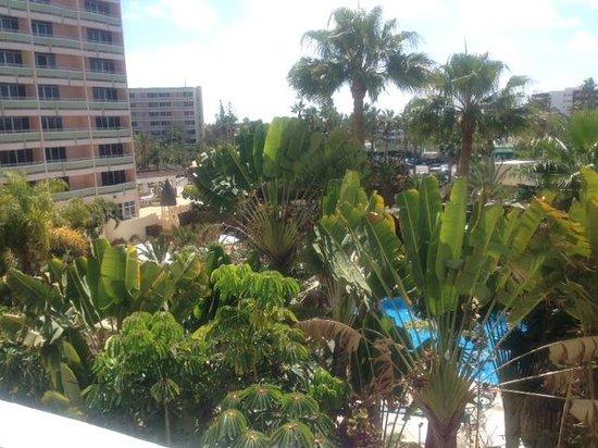 IFA Buenaventura Hotel: Las vistas desde nuestra habitación