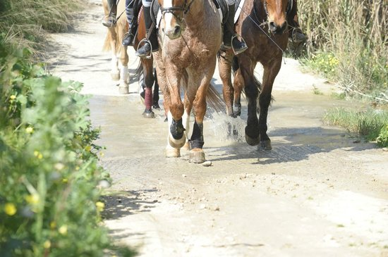 Riding Academy of Crete - Ippikos Riding Club: βόλτα στο φαράγγι