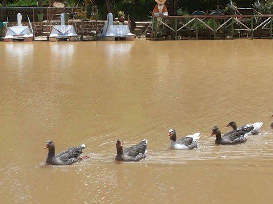 Laguna Angostura: Represa Angustura