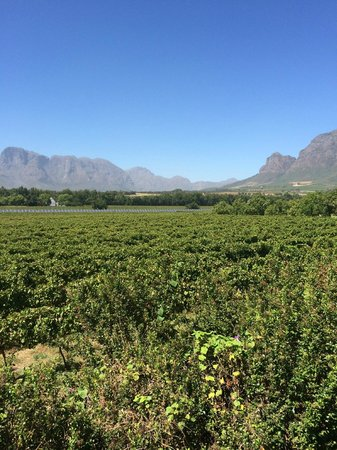 Vrede en Lust Winery: view from tasting room