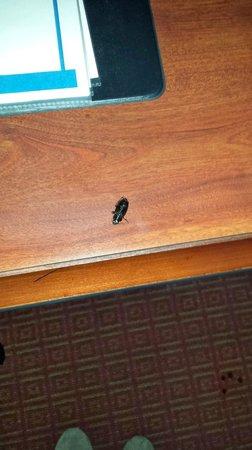 Rosen Inn International : Cockroach left on the desk, wonderful first impression