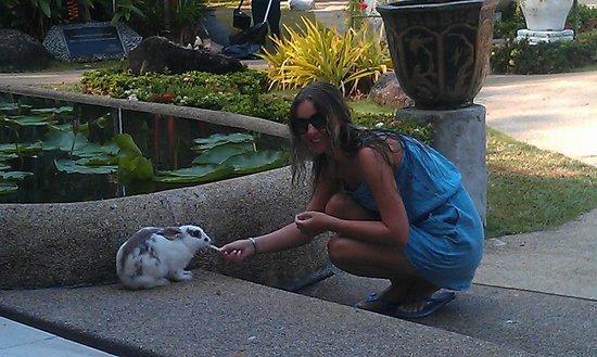 Thavorn Palm Beach Resort: кролики местные