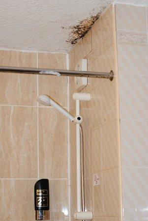 Hylands Hotel: Douche avec la moisissure