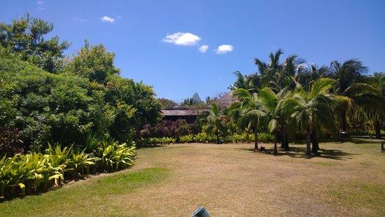 Maradiva Villas Resort and Spa : Bit more watering needed!