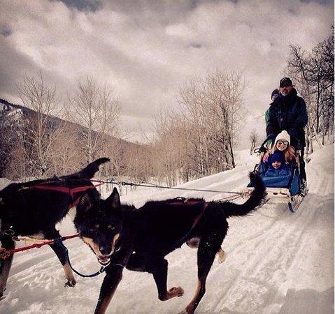 Stein Eriksen Lodge Deer Valley: Dogsledding arranged by hotel