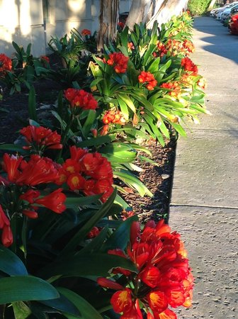 Sheraton San Jose Hotel: Grounds in Bloom