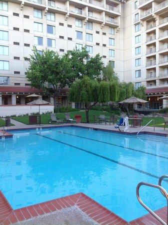 Sheraton San Jose Hotel : Pool