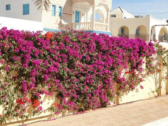Zita Beach Resort: fleurs