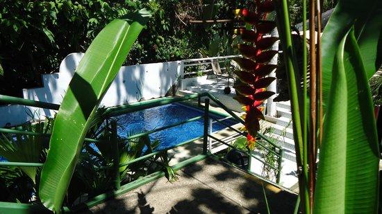 Hotel Mandarina : Pool area