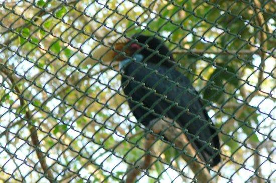 Phu Pha Nam Resort: Vogel in de voliëre