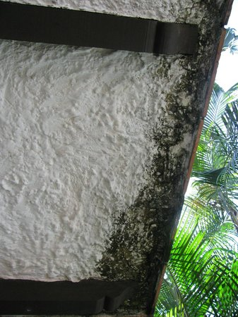 Hacienda Buenaventura Hotel & Mexican Charm All Inclusive: mold on terrace above our patio, and you could smell it!!