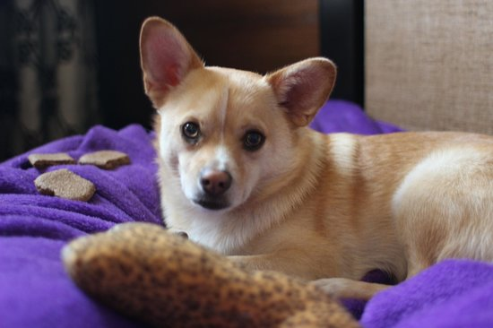 Kimpton RiverPlace Hotel: Pet Friendly with treats and toys upon arrival