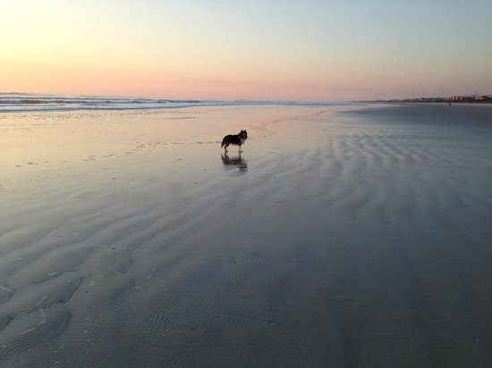 St. Augustine Beach: Milo and Sunrise on Anastasia Island in St Augustine