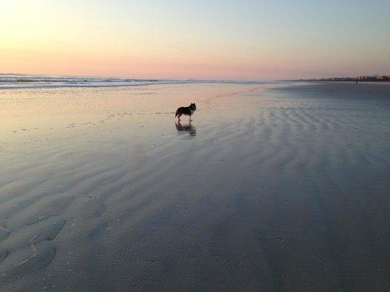 St Augustine Beach Milo And Sunrise On Anastasia Island In