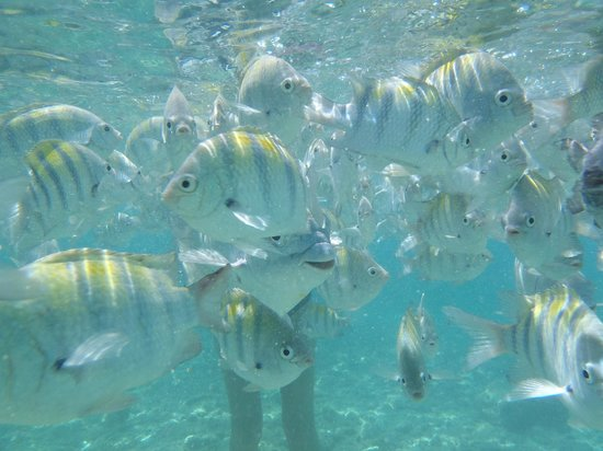 Maria's Kan-kin: snorkeling
