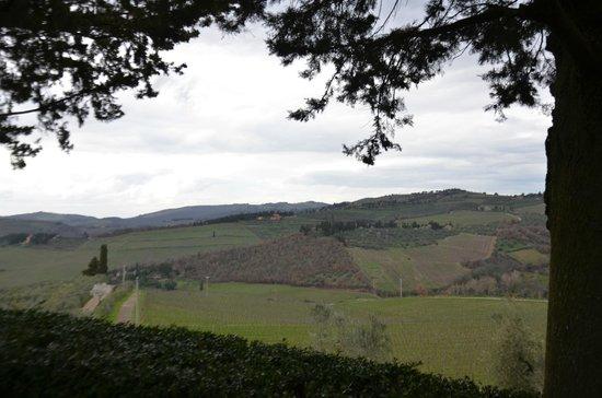 Fontodi Winery: _