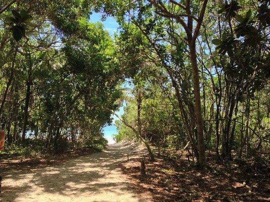 Lopes Mendes Beach : Trilha com vista da praia de Lopes Mendes