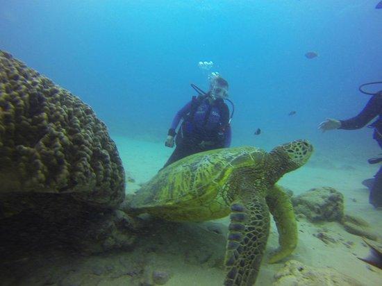 Oahu Diving: Gentle Giants