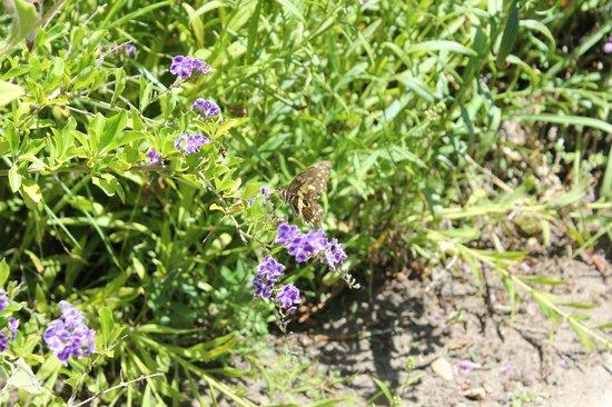 Vredenheim: butterfly