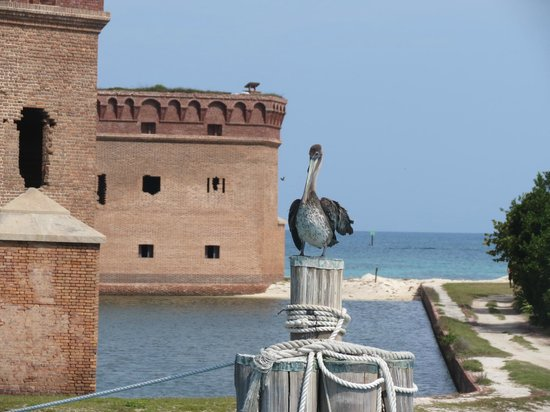 Dry Tortugas National Park: Plenty of wildlife to go with the fort and the  history.