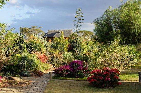 Segera Retreat: im Garten