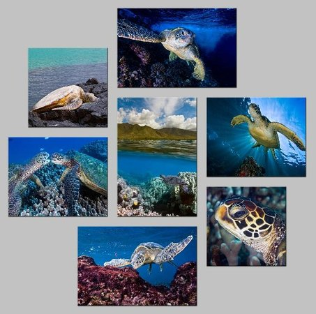 turtle cluster aluminum prints picture of reeflections fine art