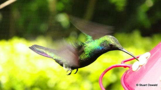 Enchanted Garden: So many great pictures to take of these wonderful birds.
