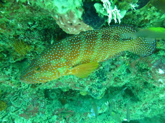 Blue-Fin Diving: Bello