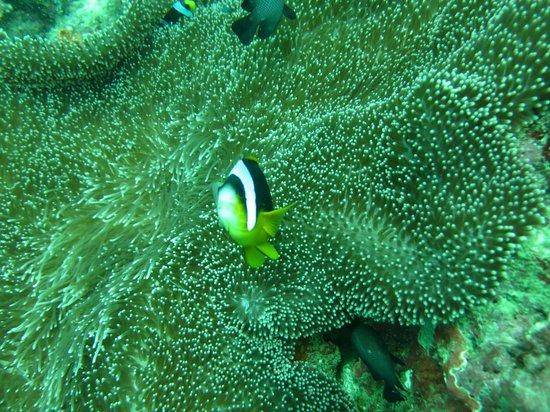 Blue-Fin Diving: nemo