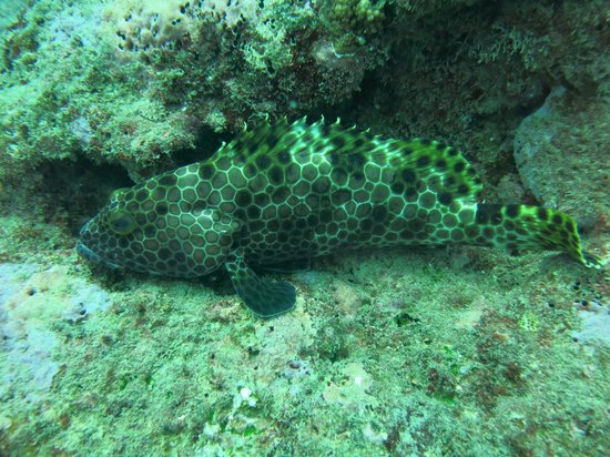 Blue-Fin Diving: Immobile