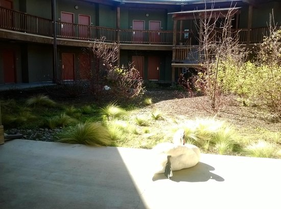 Gaia Hotel & Spa Redding, an Ascend Hotel Collection Member: swan and room courtyard