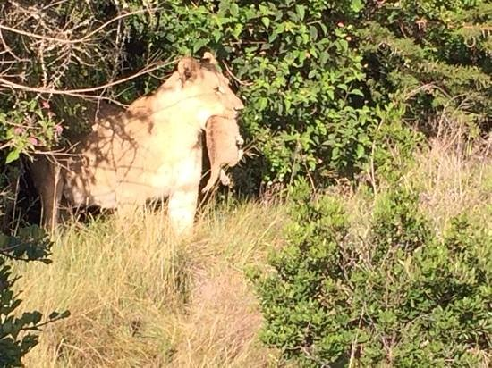 Sibuya Game Reserve-Forest Camp: an amazing moment!