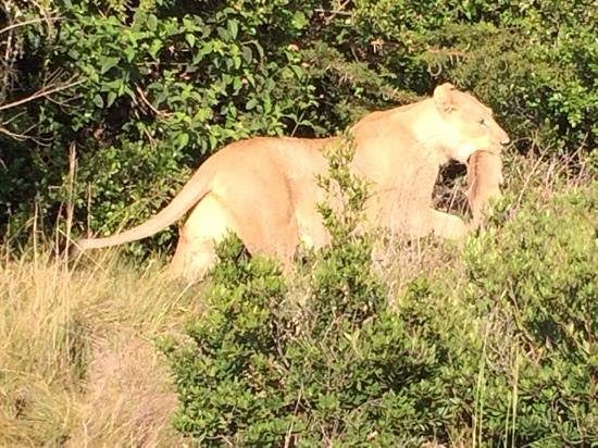 Sibuya Game Reserve-Forest Camp: how big are they now?