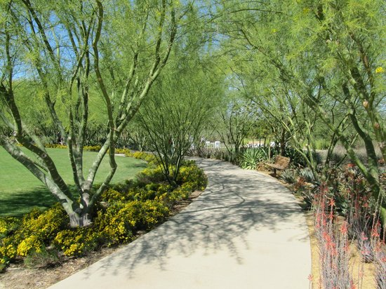 Palo Verde Trees Picture Of Sunnylands Center Gardens Rancho