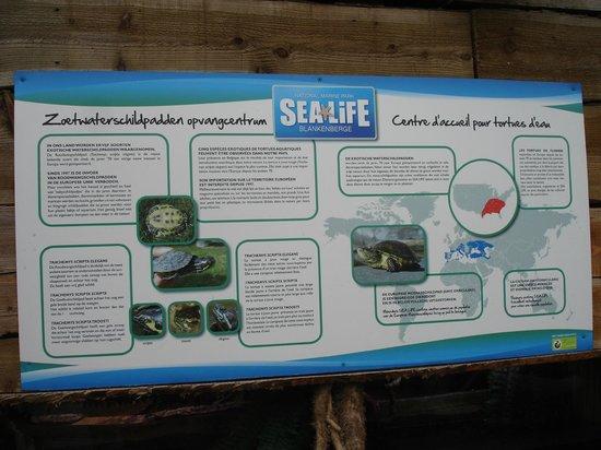 SEA LIFE Blankenberge: de opvang voor de waterschildpadden